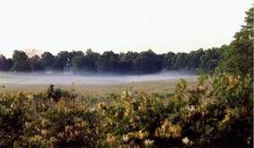 The morning mist--picture taken on a morning walk in an outlying county.
